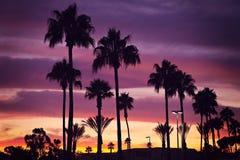 Palmträd och solnedgång Fotografering för Bildbyråer