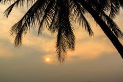Palmträd och solnedgång på skymningtid, kontur Fotografering för Bildbyråer