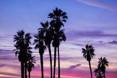 Palmträd och solnedgånghimmel Arkivfoto