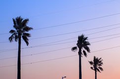 Palmträd- och solnedgånghimmelfärg Royaltyfri Fotografi