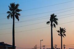 Palmträd- och solnedgånghimmelfärg Royaltyfri Bild