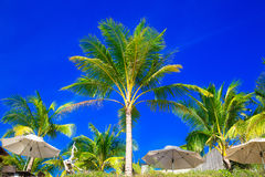 Palmträd och solparaplyer på en tropisk strand, himlen i Royaltyfri Bild