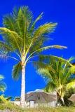 Palmträd och solparaplyer på en tropisk strand, himlen i Arkivbild
