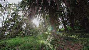 Palmträd och strålarna av solen Tropisk trädgård med en variation av växter Botanisk trädgård Batumi arkivfilmer