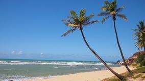 Palmträd och strand Arkivbilder