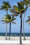 Palmträd och sunbathers på stranden Arkivfoton