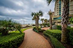 Palmträd och trädgårdar längs en gångbana i Virginia Beach, oskuld Fotografering för Bildbyråer