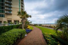 Palmträd och trädgårdar längs en gångbana i Virginia Beach, oskuld Arkivbilder