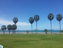 Palmträd och trevlig sikt av stranden Arkivbilder