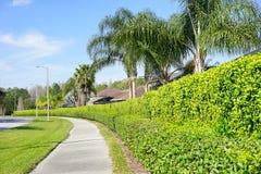 Palmträd och väg Fotografering för Bildbyråer