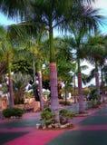 Palmträd och växter på en parkera Arkivbild