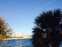 Palmträd och vatten Royaltyfri Foto
