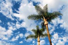 Palmträd och vitmoln Fotografering för Bildbyråer