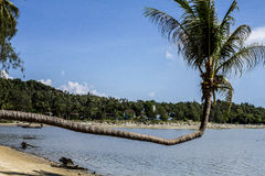 Palmträd ovanför stranden, Koh Phangan, Thailand arkivbild