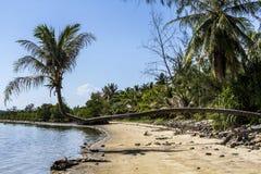Palmträd ovanför stranden, Koh Phangan, Thailand royaltyfri fotografi