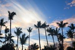 Palmträd på bakgrund för blå himmel, gömma i handflatan filialer på himmelbakgrund, konturer av palmträd, kronor gömma i handflat arkivfoto