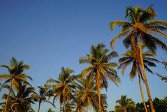 Palmträd på bakgrunden av blå himmel Royaltyfri Fotografi