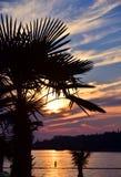 Palmträd på bakgrunden av en härlig solnedgång Royaltyfri Fotografi