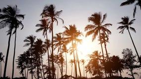 Palmträd på bakgrunden av en härlig solnedgång lager videofilmer