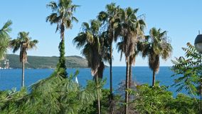 Palmträd på bakgrunden av havet lager videofilmer
