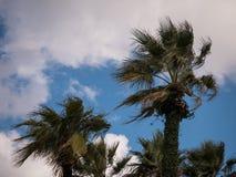 Palmträd på clearlhimmel Arkivbild