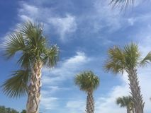Palmträd på den Biloxi stranden Arkivfoto