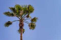 Palmträd på den blåa skyen Arkivbild