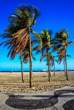 Palmträd på den blåsiga och soliga dagen på den Copacabana stranden, Rio de Janeiro, Brasilien royaltyfri bild