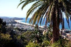 Palmträd på den Collaroy platån Arkivfoto