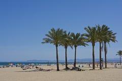 Palmträd på den crowdy Cullera stranden Royaltyfri Bild