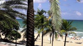 Palmträd på den härliga stranden av Ft Lauderdale USA cityscapes stock video