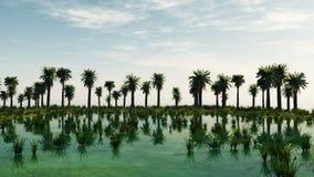 Palmträd på den laguna ön solig dag arkivfilmer