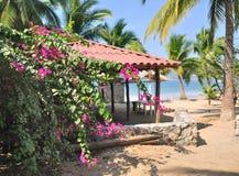 Palmträd på den LaRopa stranden Royaltyfria Bilder