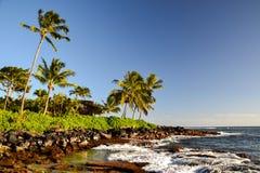 Palmträd på den Lawai stranden - Poipu, Kauai, Hawaii, USA Arkivbilder
