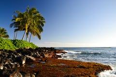 Palmträd på den Lawai stranden - Poipu, Kauai, Hawaii, USA arkivfoto