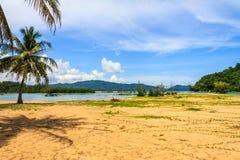 Palmträd på den Nai Yang stranden royaltyfria bilder