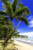 Palmträd på den Nopparat Thara stranden. Arkivbild