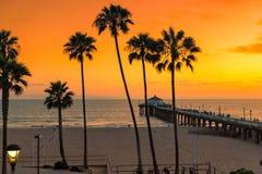 Palmträd på den orange solnedgången på den Kalifornien stranden royaltyfri foto