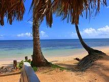 Palmträd på den sandiga stranden Arkivbilder
