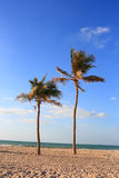 Palmträd på den Sharjah stranden Royaltyfria Foton