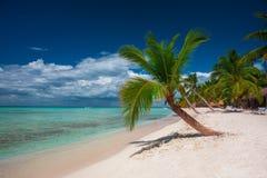 Palmträd på den tropiska östranden Saona, Dominikanska republiken royaltyfri foto