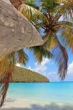 Palmträd på den tropiska strandön arkivfoton
