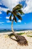 Palmträd på den tropiska stranden Royaltyfri Foto
