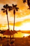 Palmträd på den tropiska stranden Fotografering för Bildbyråer