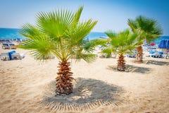 Palmträd på den tropiska stranden av Alanya, Turkiet Sommarsemester på stranden Royaltyfri Foto