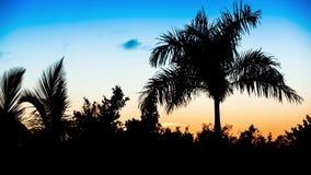 Palmträd på den tropiska stranden på soluppgång, video stock video