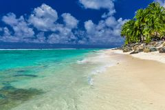 Palmträd på den vibrerande stranden, kock Islands, Rarotonga Royaltyfri Bild