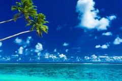 Palmträd på den vibrerande stranden, tropisk kock Islands Arkivbilder