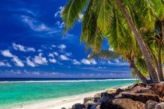Palmträd på den vibrerande stranden, tropisk kock Islands, Rarotong Royaltyfri Fotografi
