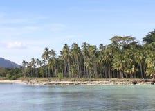 Palmträd på den vita sandiga stranden Arkivfoto